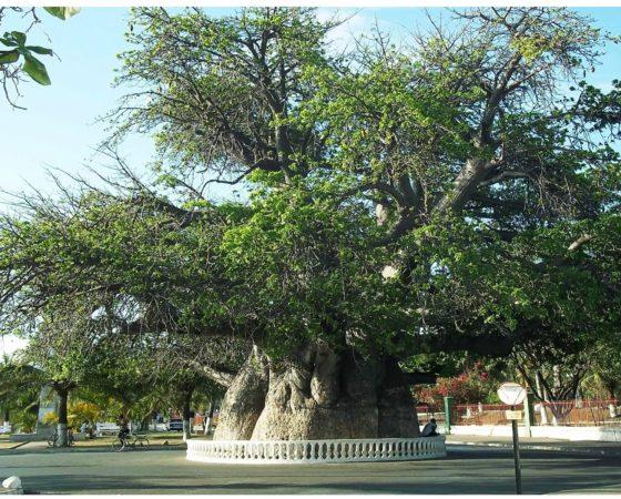 the North trip, from Antananarivo to Diégo Suarez, Antsiranana